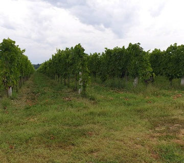 Visiting fruit growers and winemakers throughout Hungary
